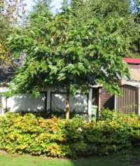 Kleine Bomen Voor In De Tuin.Simons Tuin En Boomzorg